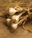 Loupání a drcení česneku