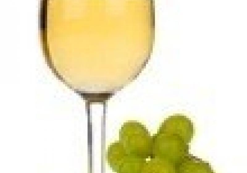 Degustace svatomartinského vína