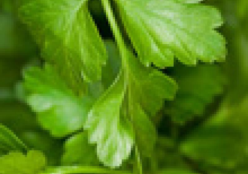 Jak rychle a snadno na bylinky
