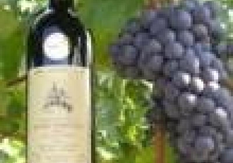 Řízená degustace vrbických vín