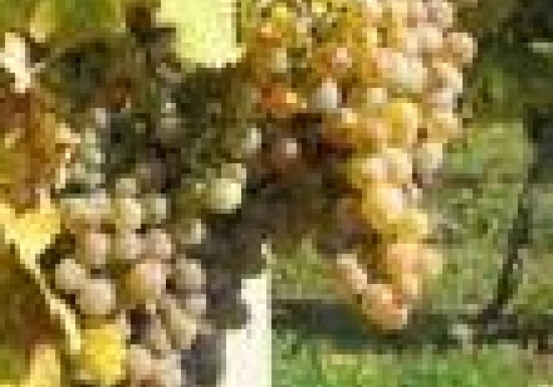 Degustace moravského vína v Brušperku