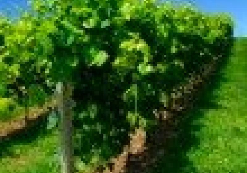 Cyklovýlet po vinohradech Uherskohradišťska