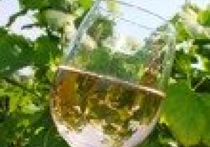 Degustace vína ve Zlíně