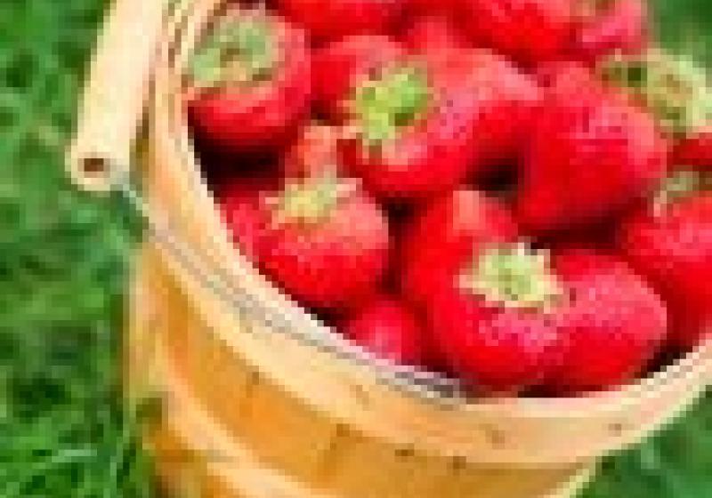 Hlásí se nové farmářské trhy