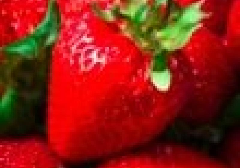 Pražská náplavka přivítá farmářské trhy