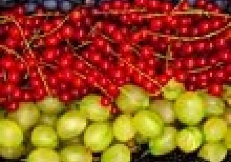 Farmářské trhy na Pankráci každou středu