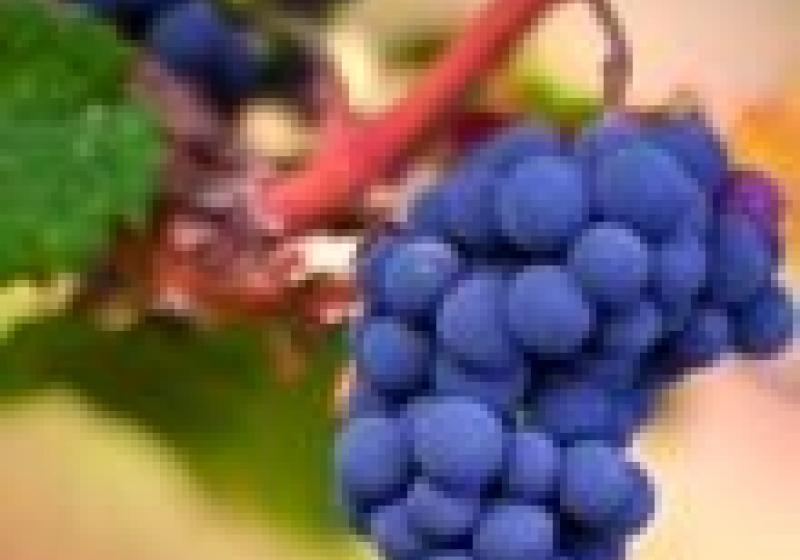 Vinaři neznají původ hroznů, vína stahují z oběhu