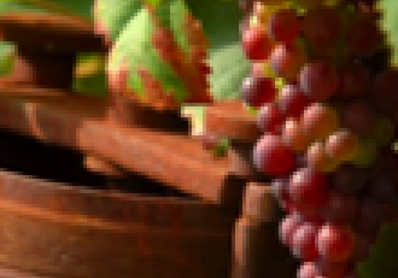 Svatováclavské vinobraní na Hradě
