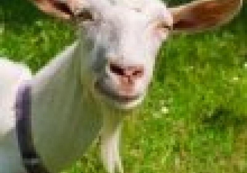 Staňte se na jeden den pastevcem