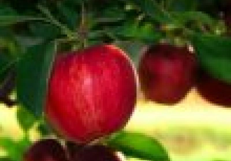 Vychutnejte si září s biopotravinami