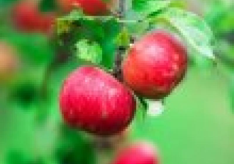 Jablečná slavnost v Hostětíně