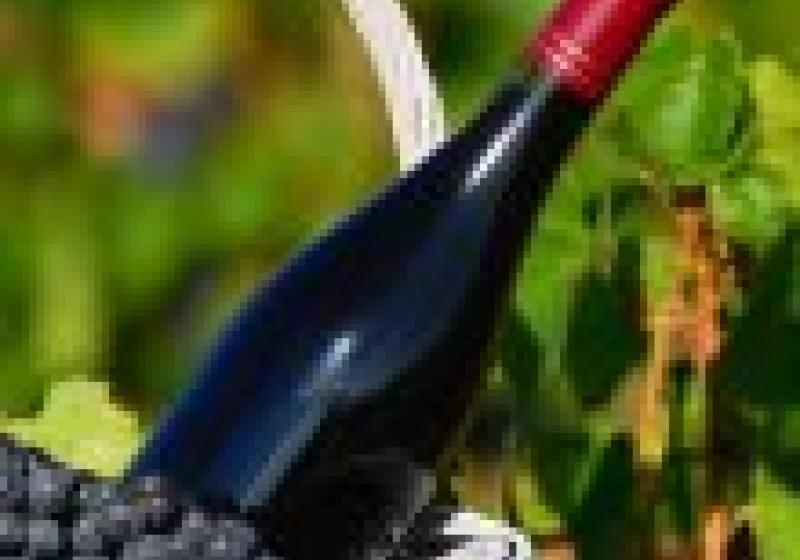 Vinařský svátek beaujolais nouveau se blíží!