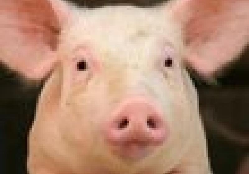 Jamie Oliver chrání britské pašíky