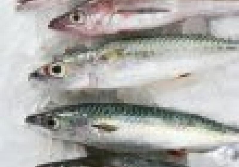 Kam o víkendu: Karlínský rybí trh