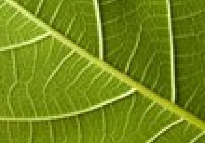 Biopotraviny zdražují