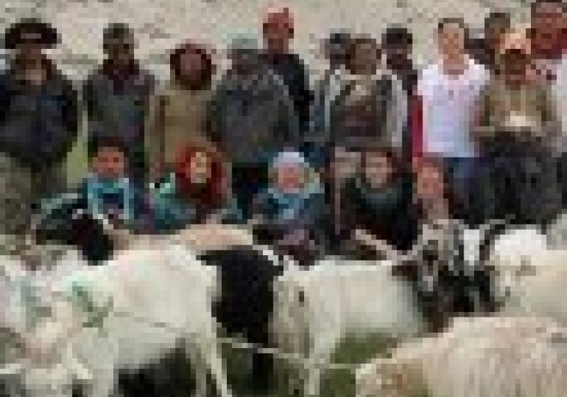 Koza ProTibet – podpora tibetských nomádů
