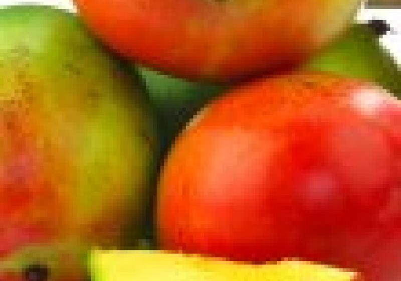 Problém: nezralé mango