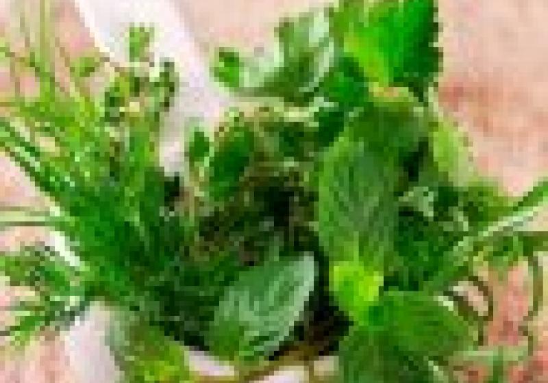 Na víkend: bylinkové knedlíky ke svíčkové