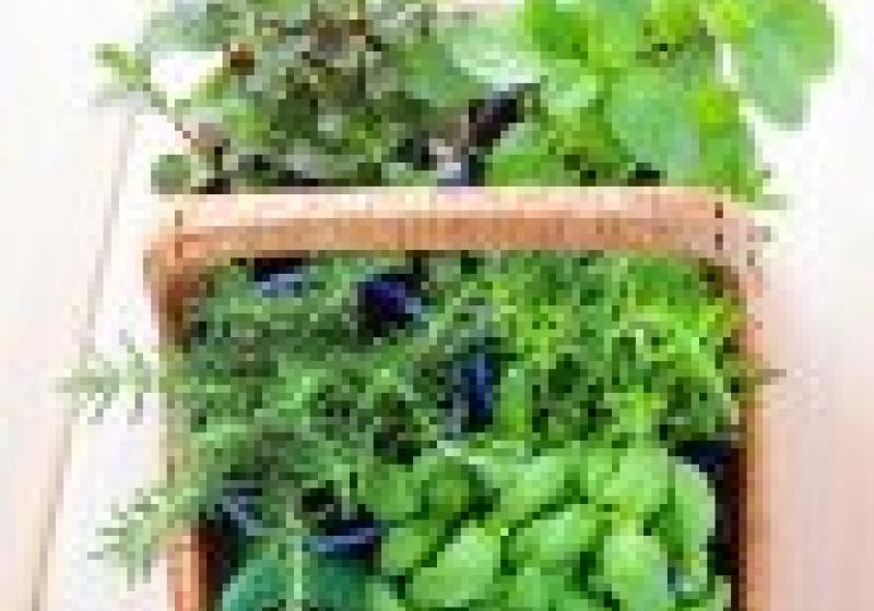 Slavnosti bylinek, čajů a koření na Jiřáku