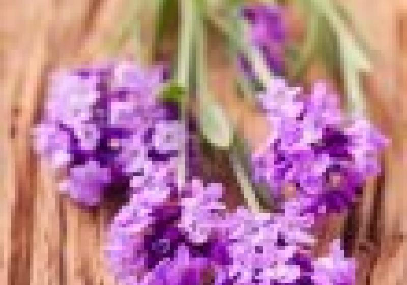 Léčivé bylinky: máta pro lepší trávení, levandule pro klidný spánek