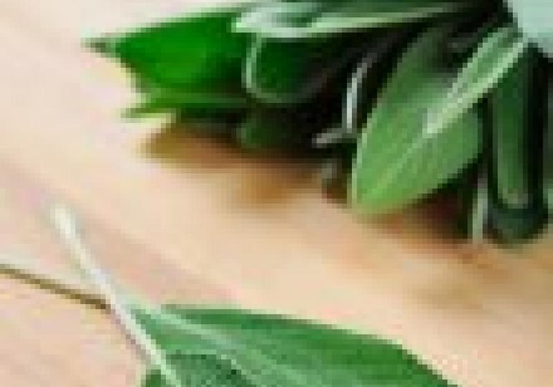 Podzimní bylinky: šalvěj