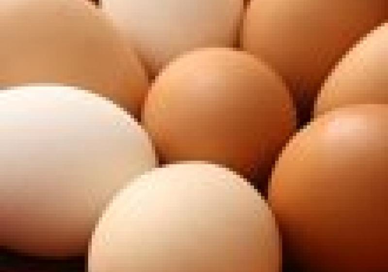 Nejrychleji obarvená vejce