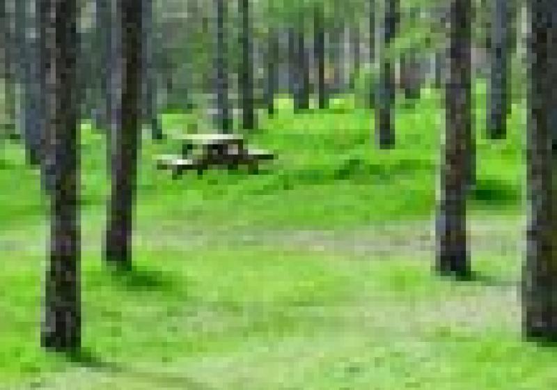 Jak zabalit salát na piknik