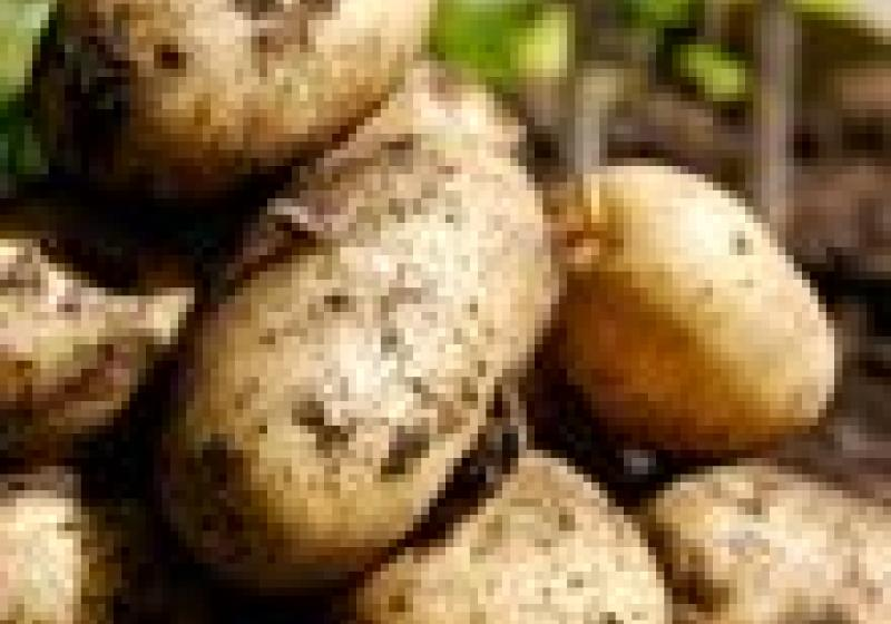 Krásná uvnitř i navenek: brambory
