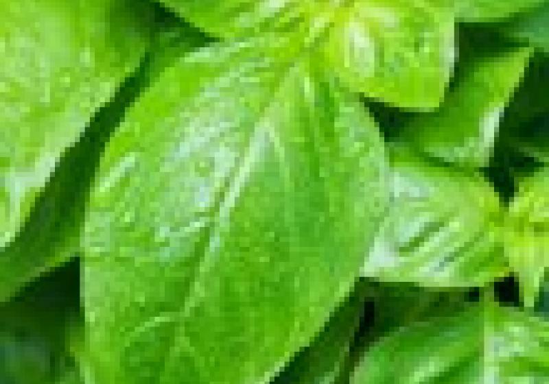 Provoňte grilovaná jídla bylinkami